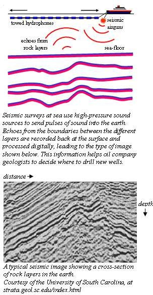 Seismic surveys at sea use high-pressure sound sources to send pulses of sound into the earth.