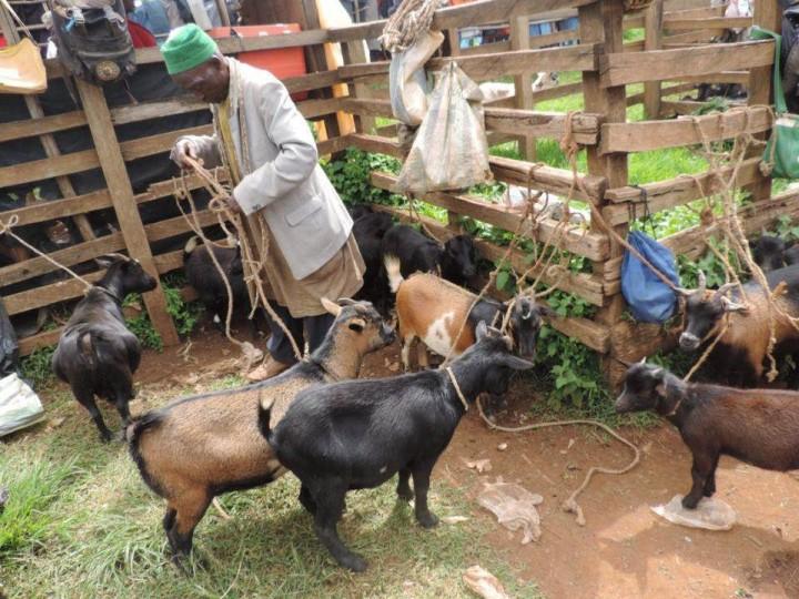 Cameroon famer Image Flickr BecA ILRI Hub