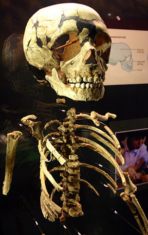 Neanderthal child wikipedia commons