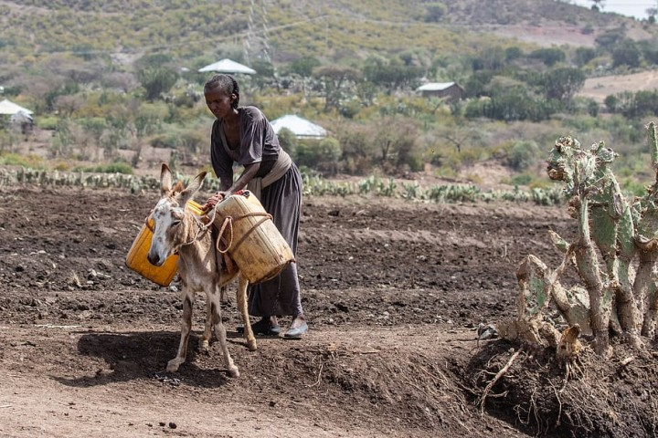 ethiopia africa poverty agriculture Image WP