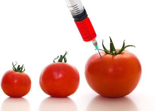 genetically modified food for human need or corporate greed