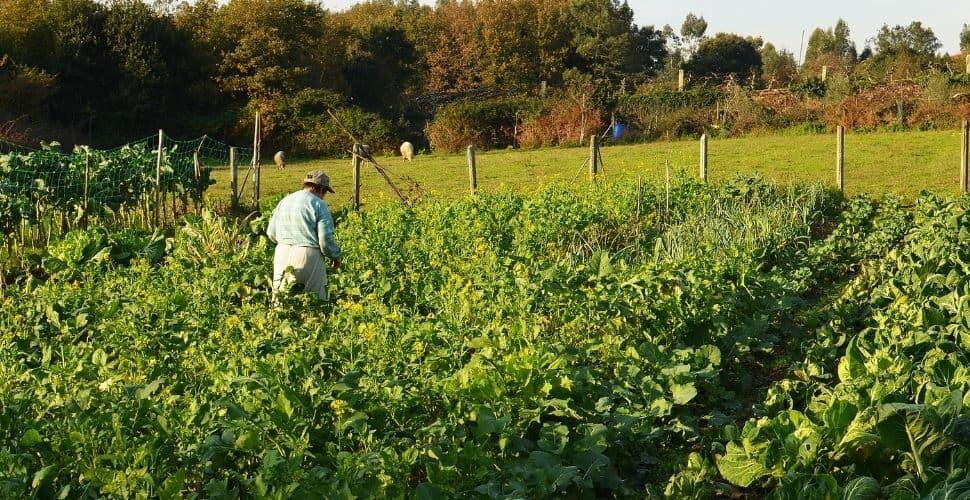 Farmworker Portugal Image Freedom United